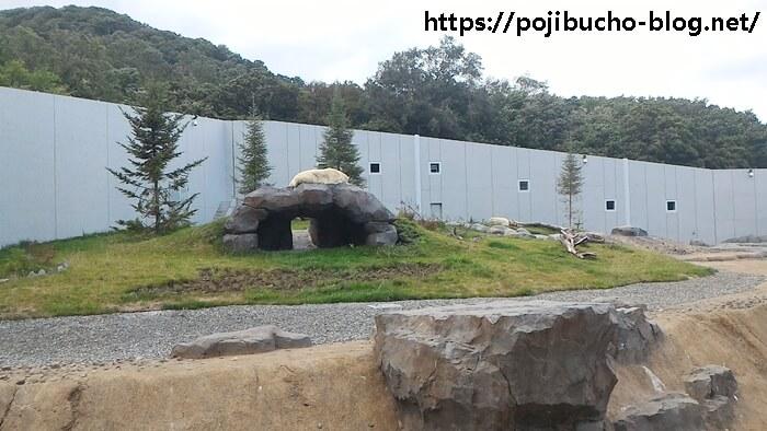 円山動物園のホッキョクグマ2頭の画像