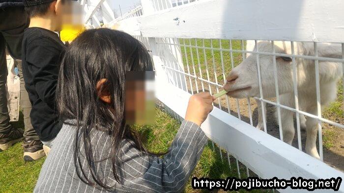 さとらんどでヤギに餌をあげている画像