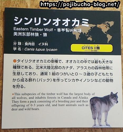 シンリンオオカミの資料