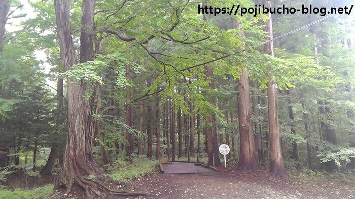 南一条通り脇の林道