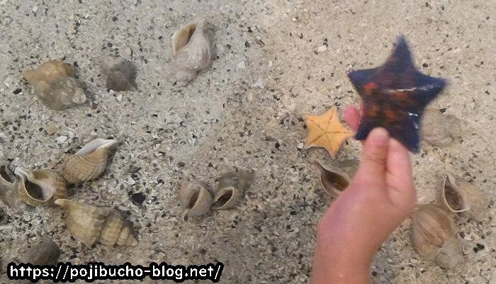 サンピアザ水族館でヒトデにタッチ