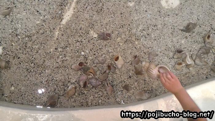 サンピアザ水族館で貝にタッチ
