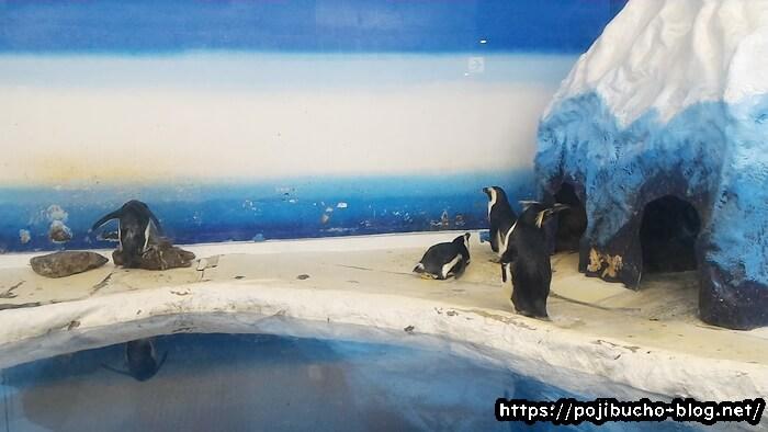 サンピアザ水族館のペンギン