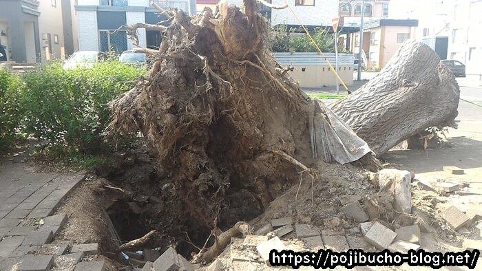 地震で木が倒れる