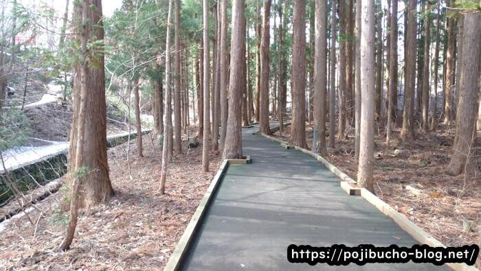 円山動物園方面への舗装された道
